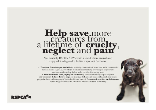 RSPCA NSW Australia direct mail pack poster design